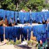 Pflanzenfarbe Indigo: Blauer als der Ozean